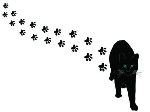 cat paw prints trail