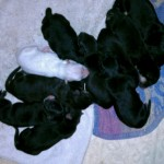 10 Puppies April 10th