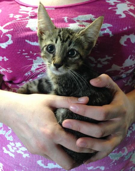 Hector the Kitten