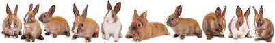 rabbitlinecolor