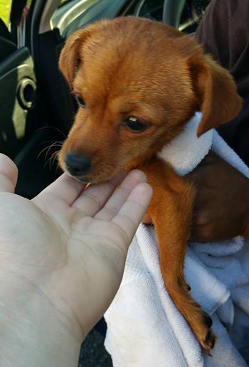 Puppy42416
