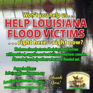 Help After the Flood